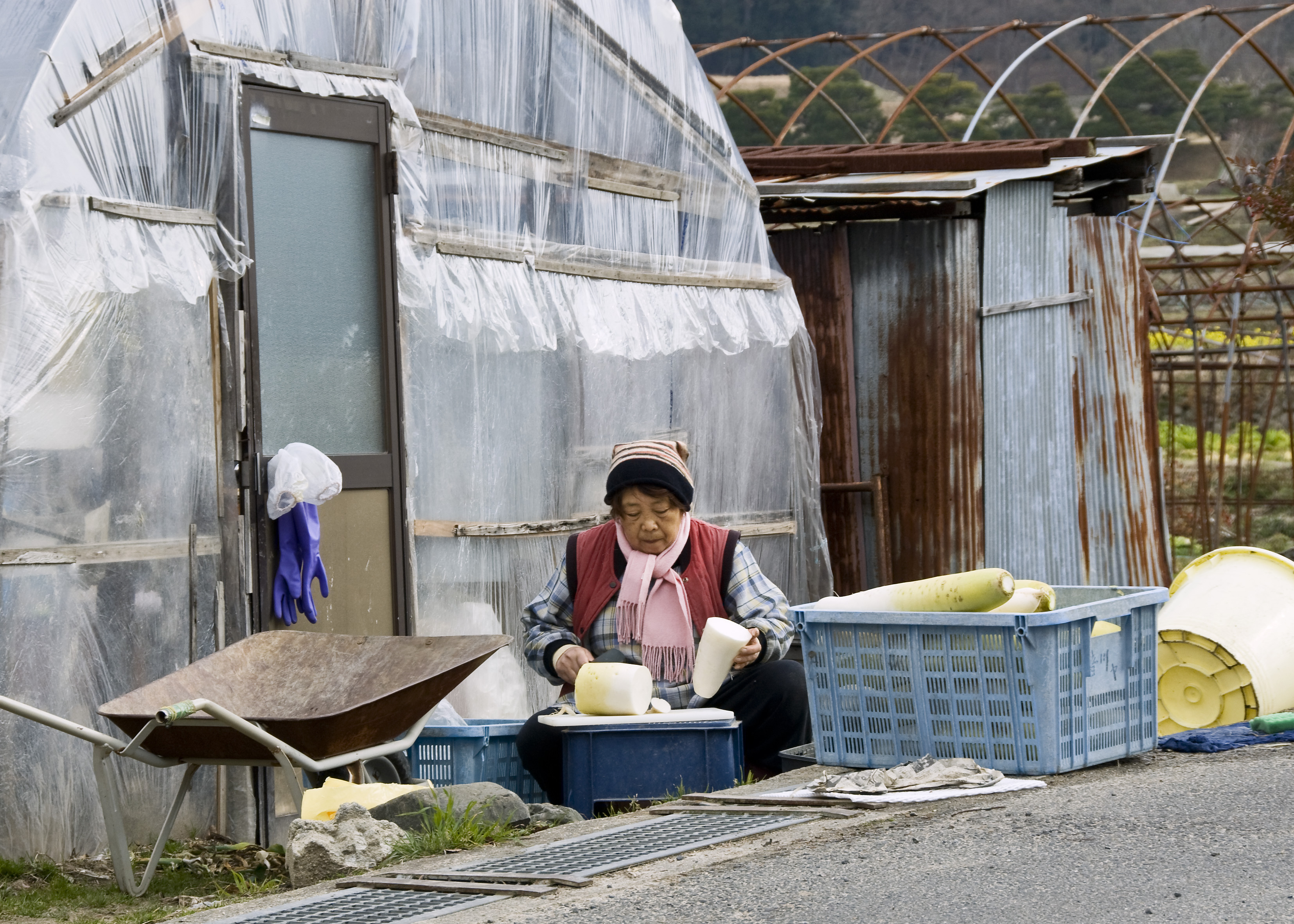 Japanese farmworker