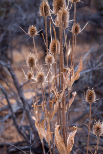 Dried flowers on the beach