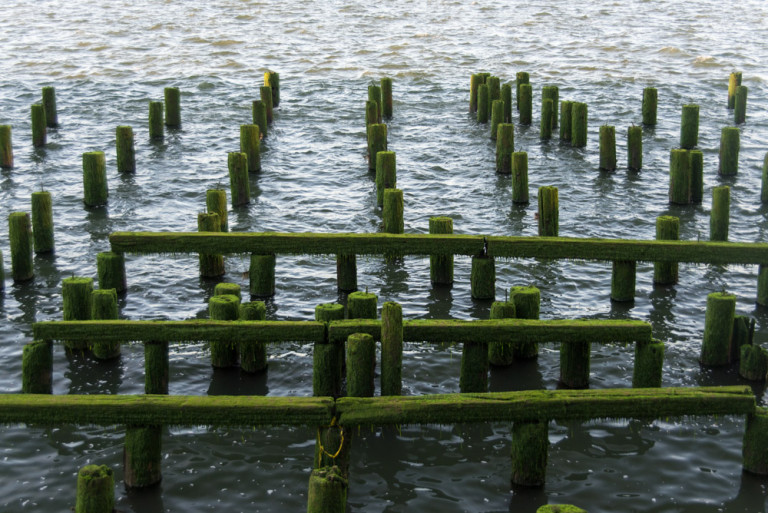 Posts in Columbia River