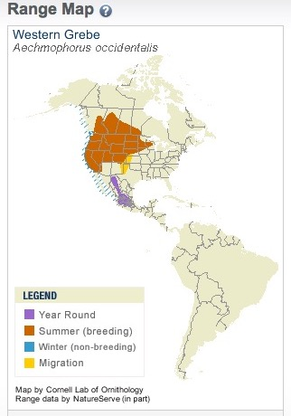 grebe range map