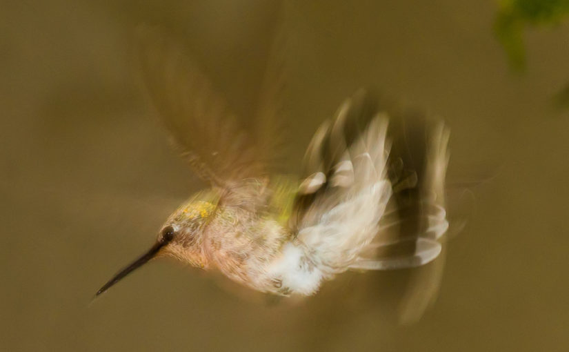 To Shoot a Hummingbird